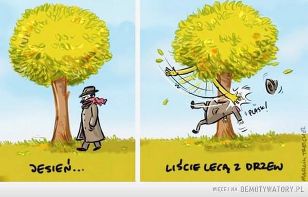 Liście lecą z drzew –