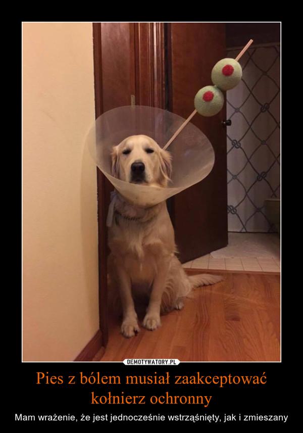 Pies z bólem musiał zaakceptować kołnierz ochronny – Mam wrażenie, że jest jednocześnie wstrząśnięty, jak i zmieszany