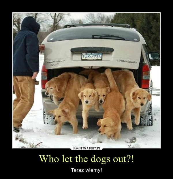 Who let the dogs out?! – Teraz wiemy!