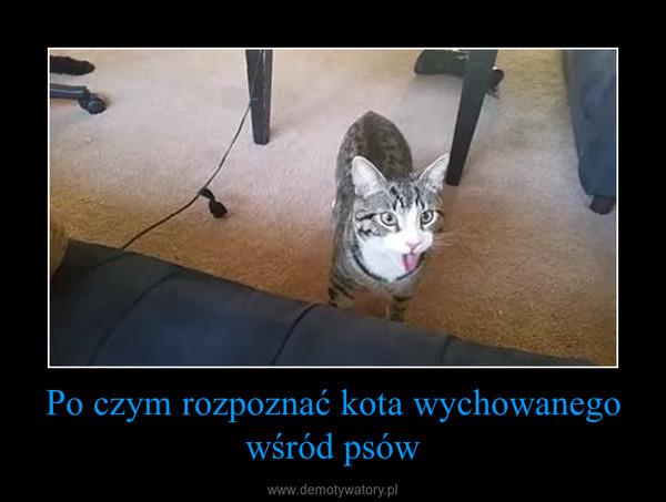 Po czym rozpoznać kota wychowanego wśród psów –