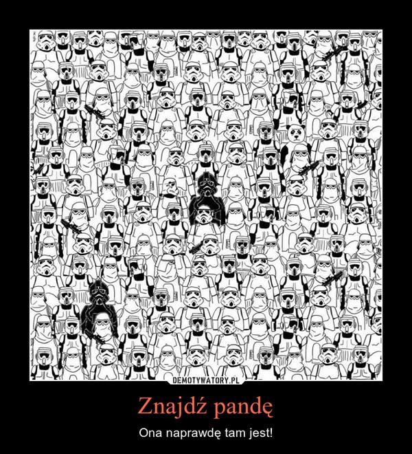 Znajdź pandę – Ona naprawdę tam jest!