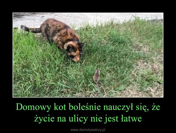 Domowy kot boleśnie nauczył się, że życie na ulicy nie jest łatwe –