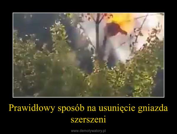 Prawidłowy sposób na usunięcie gniazda szerszeni –
