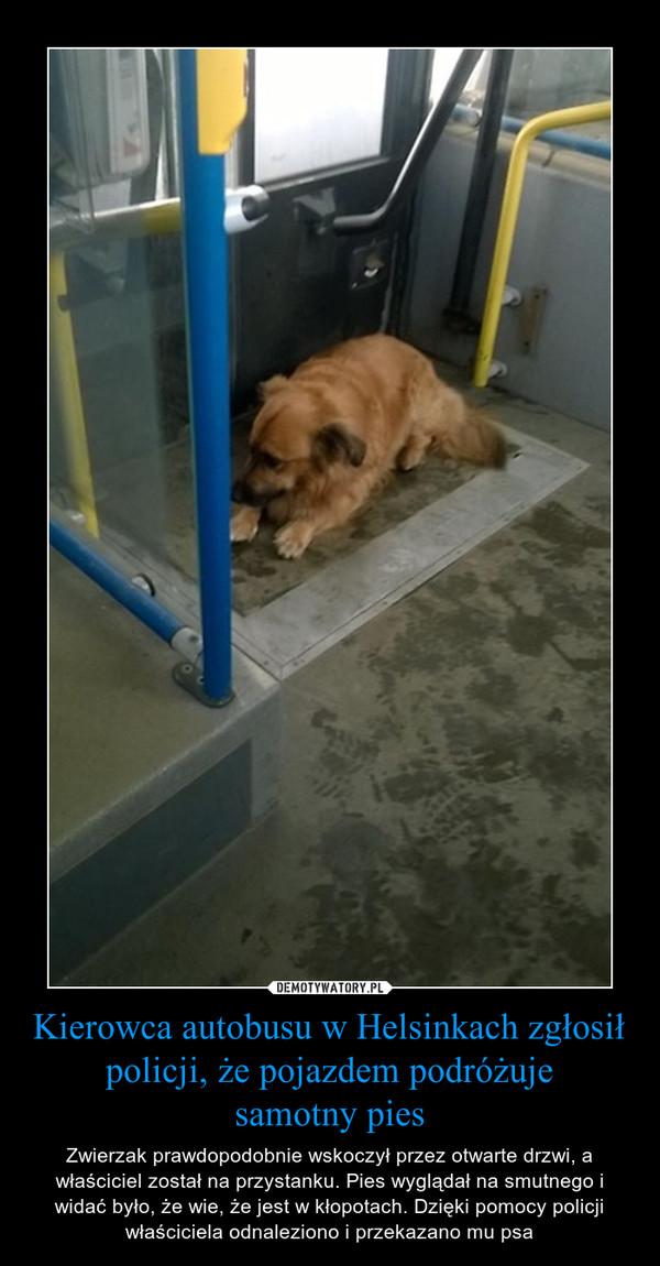 Kierowca autobusu w Helsinkach zgłosił policji, że pojazdem podróżujesamotny pies – Zwierzak prawdopodobnie wskoczył przez otwarte drzwi, a właściciel został na przystanku. Pies wyglądał na smutnego i widać było, że wie, że jest w kłopotach. Dzięki pomocy policji właściciela odnaleziono i przekazano mu psa