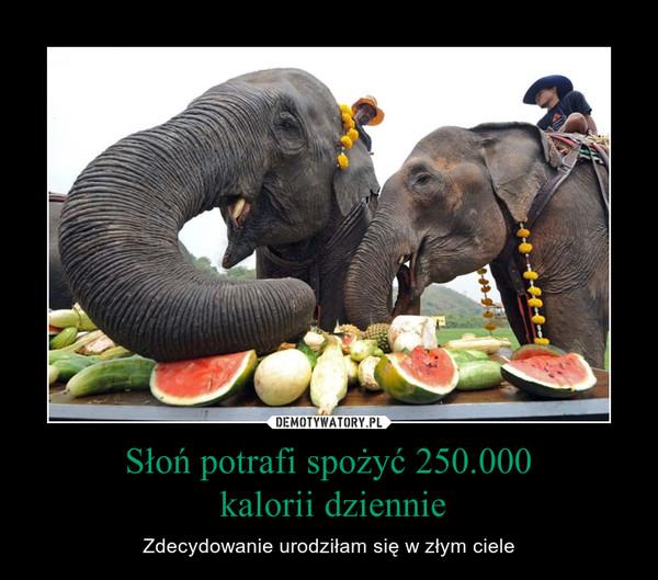 Słoń potrafi spożyć 250.000 kalorii dziennie – Zdecydowanie urodziłam się w złym ciele