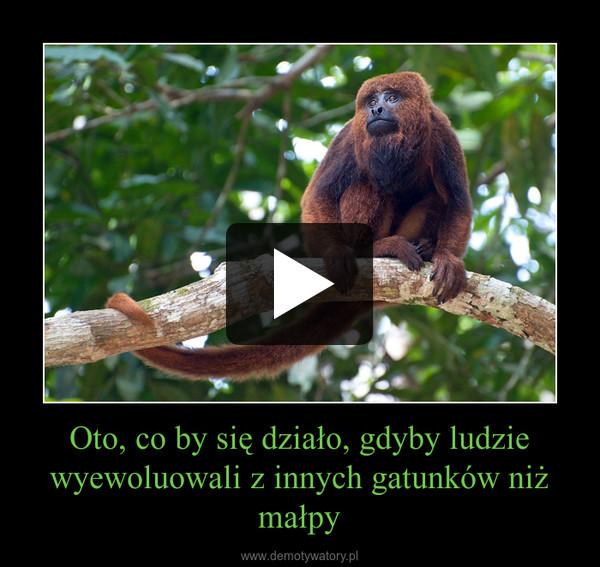 Oto, co by się działo, gdyby ludzie wyewoluowali z innych gatunków niż małpy –