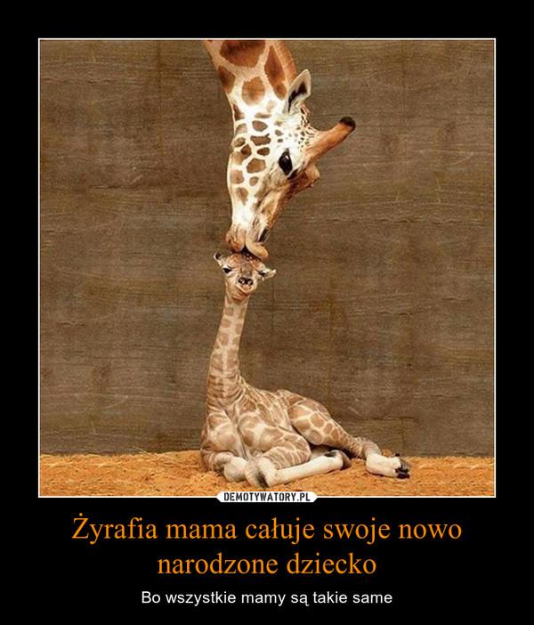 Żyrafia mama całuje swoje nowo narodzone dziecko – Bo wszystkie mamy są takie same