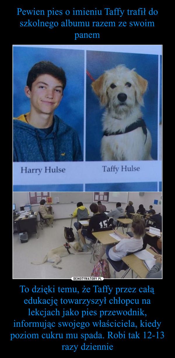To dzięki temu, że Taffy przez całą edukację towarzyszył chłopcu na lekcjach jako pies przewodnik, informując swojego właściciela, kiedy poziom cukru mu spada. Robi tak 12-13 razy dziennie –  Harry HulseTaffy Hulse