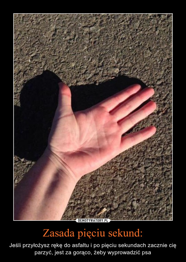 Zasada pięciu sekund: – Jeśli przyłożysz rękę do asfaltu i po pięciu sekundach zacznie cię parzyć, jest za gorąco, żeby wyprowadzić psa