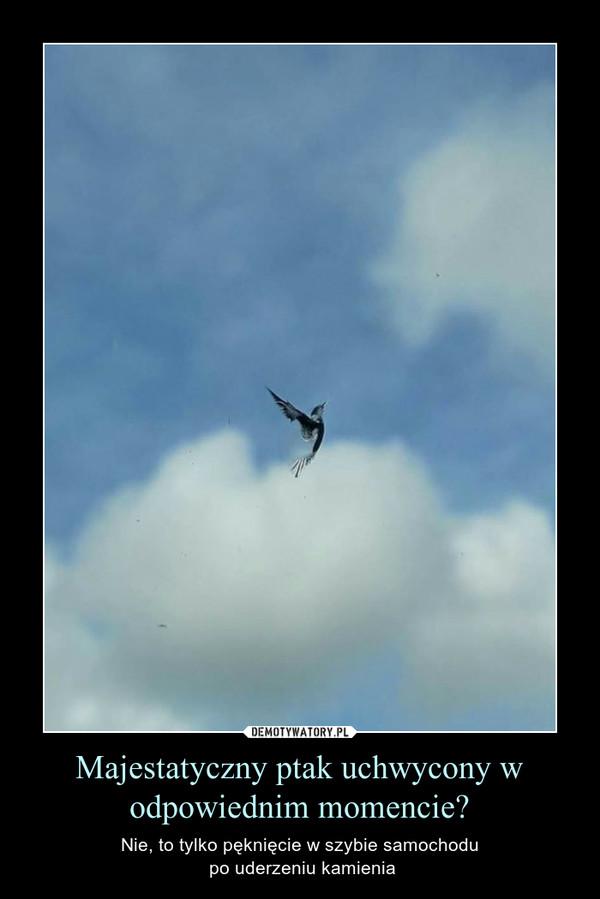 Majestatyczny ptak uchwycony w odpowiednim momencie? – Nie, to tylko pęknięcie w szybie samochodu po uderzeniu kamienia