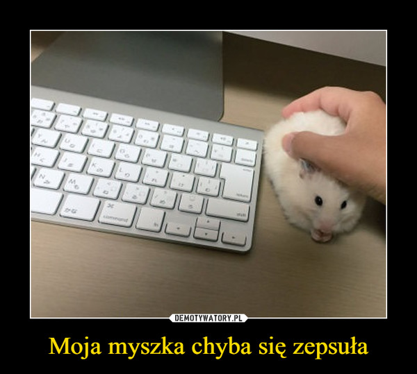 Moja myszka chyba się zepsuła –