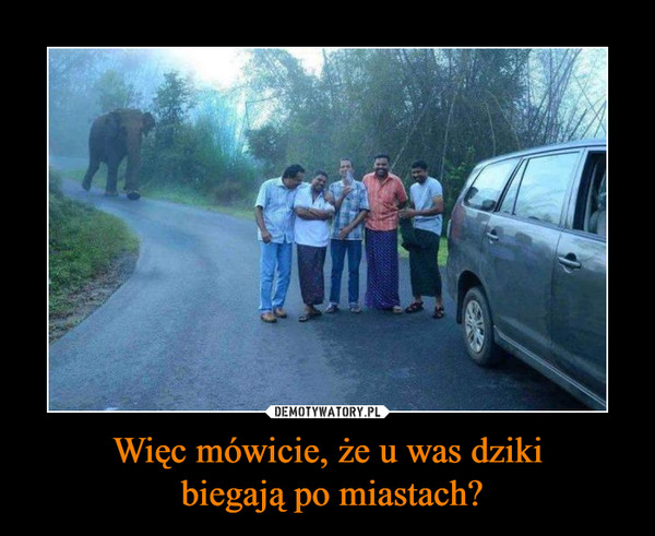 Więc mówicie, że u was dziki biegają po miastach? –
