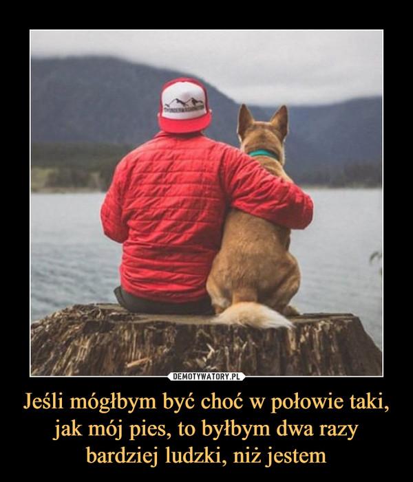 Jeśli mógłbym być choć w połowie taki, jak mój pies, to byłbym dwa razy bardziej ludzki, niż jestem –