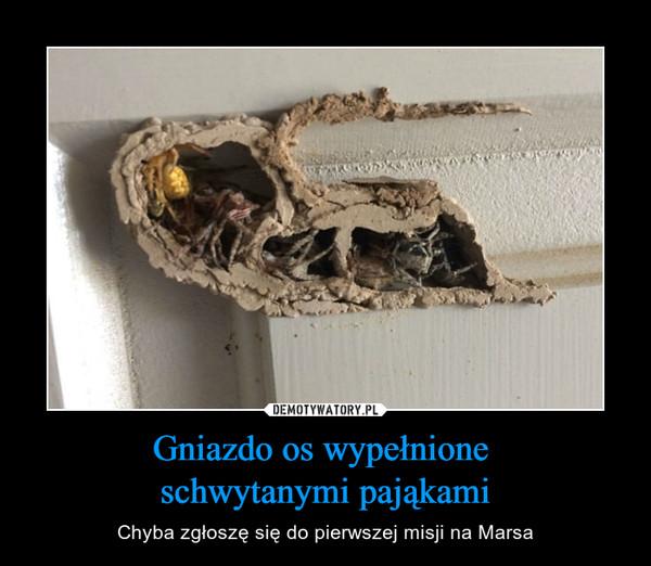 Gniazdo os wypełnione schwytanymi pająkami – Chyba zgłoszę się do pierwszej misji na Marsa