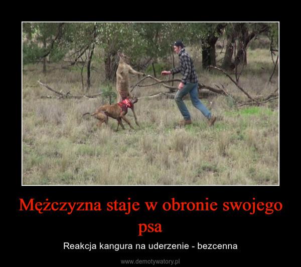 Mężczyzna staje w obronie swojego psa – Reakcja kangura na uderzenie - bezcenna