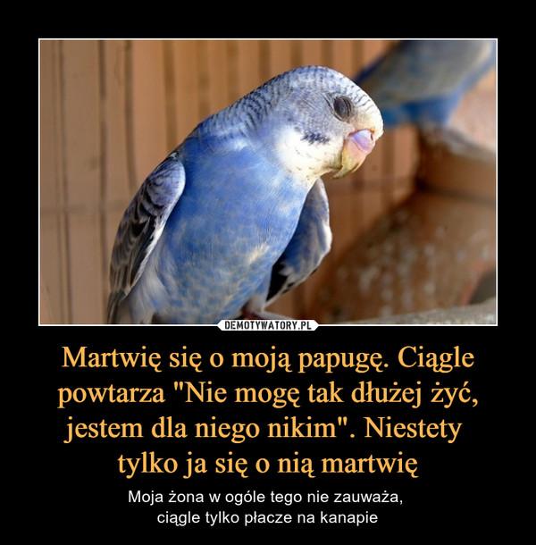 """Martwię się o moją papugę. Ciągle powtarza """"Nie mogę tak dłużej żyć, jestem dla niego nikim"""". Niestety tylko ja się o nią martwię – Moja żona w ogóle tego nie zauważa, ciągle tylko płacze na kanapie"""