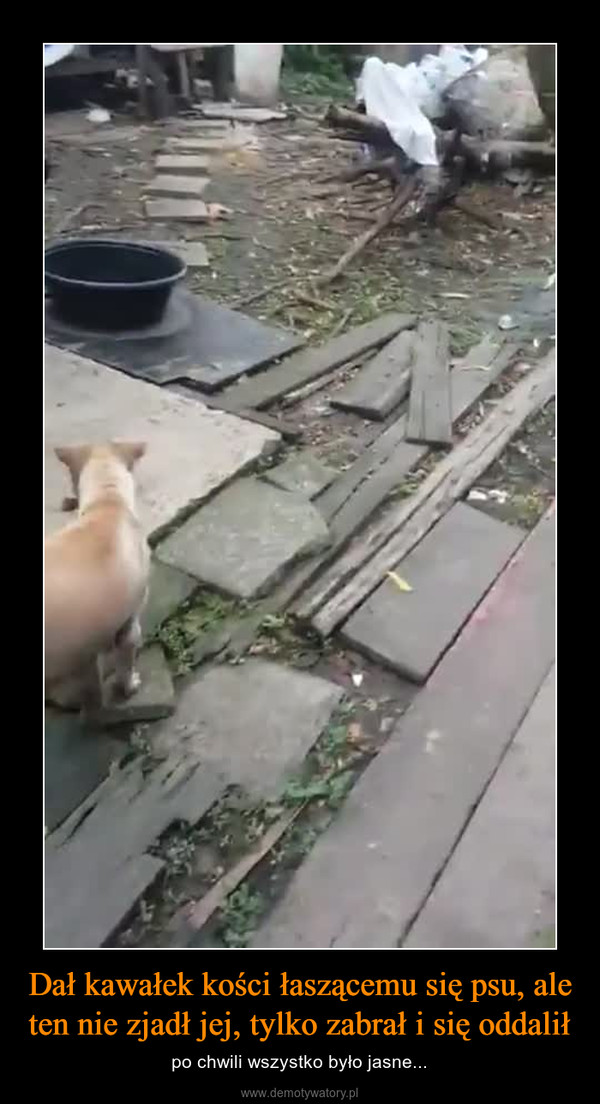 Dał kawałek kości łaszącemu się psu, ale ten nie zjadł jej, tylko zabrał i się oddalił – po chwili wszystko było jasne...