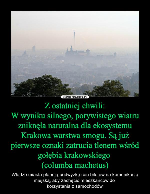 Z ostatniej chwili:W wyniku silnego, porywistego wiatru zniknęła naturalna dla ekosystemu Krakowa warstwa smogu. Są już pierwsze oznaki zatrucia tlenem wśród gołębia krakowskiego (columba machetus) – Władze miasta planują podwyżkę cen biletów na komunikację miejską, aby zachęcić mieszkańców do korzystania z samochodów