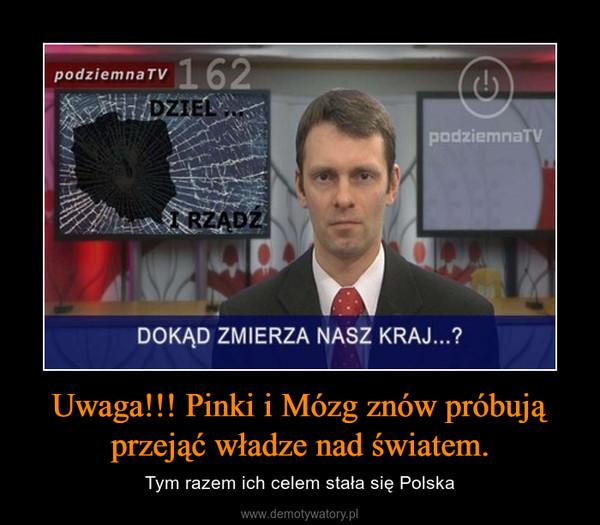 Uwaga!!! Pinki i Mózg znów próbują przejąć władze nad światem. – Tym razem ich celem stała się Polska