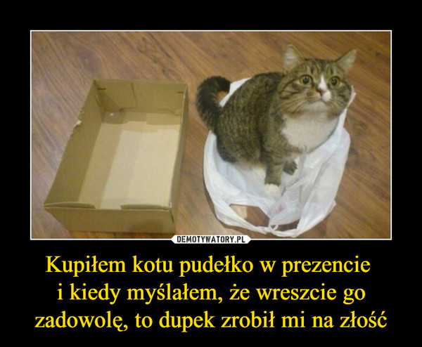Kupiłem kotu pudełko w prezencie i kiedy myślałem, że wreszcie go zadowolę, to dupek zrobił mi na złość –