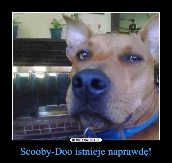 Scooby-Doo istnieje naprawdę! –