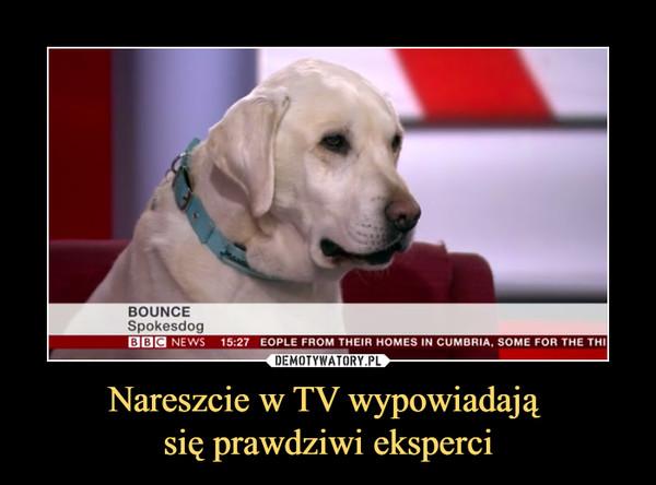 Nareszcie w TV wypowiadają się prawdziwi eksperci –  bounce spokesdog bbc news