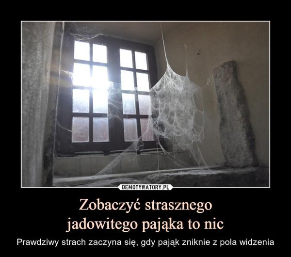 Zobaczyć strasznegojadowitego pająka to nic – Prawdziwy strach zaczyna się, gdy pająk zniknie z pola widzenia