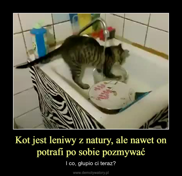 Kot jest leniwy z natury, ale nawet on potrafi po sobie pozmywać – I co, głupio ci teraz?