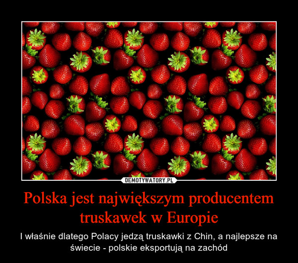 Polska jest największym producentem truskawek w Europie – I właśnie dlatego Polacy jedzą truskawki z Chin, a najlepsze na świecie - polskie eksportują na zachód