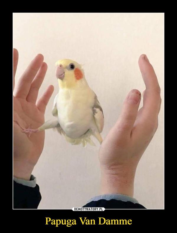 Papuga Van Damme –