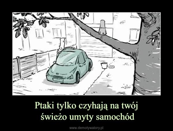 Ptaki tylko czyhają na twój świeżo umyty samochód –