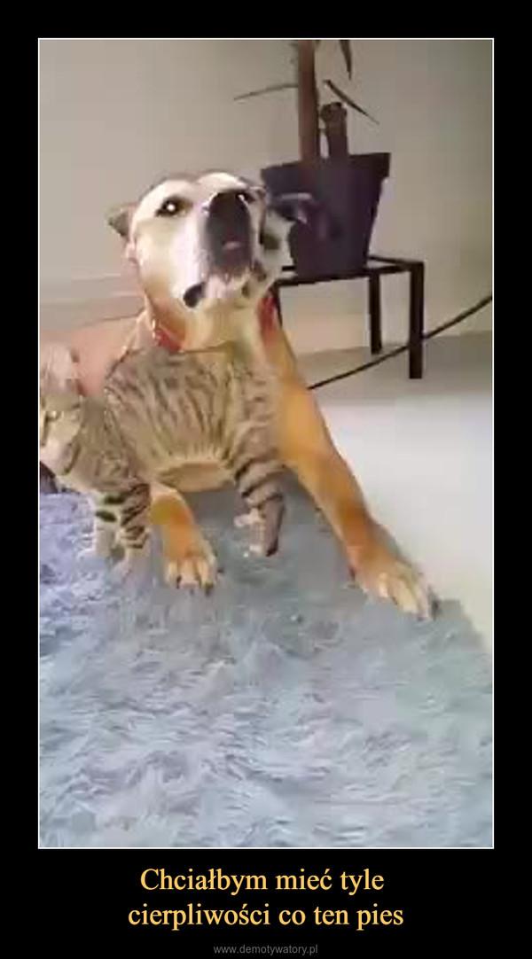 Chciałbym mieć tyle cierpliwości co ten pies –
