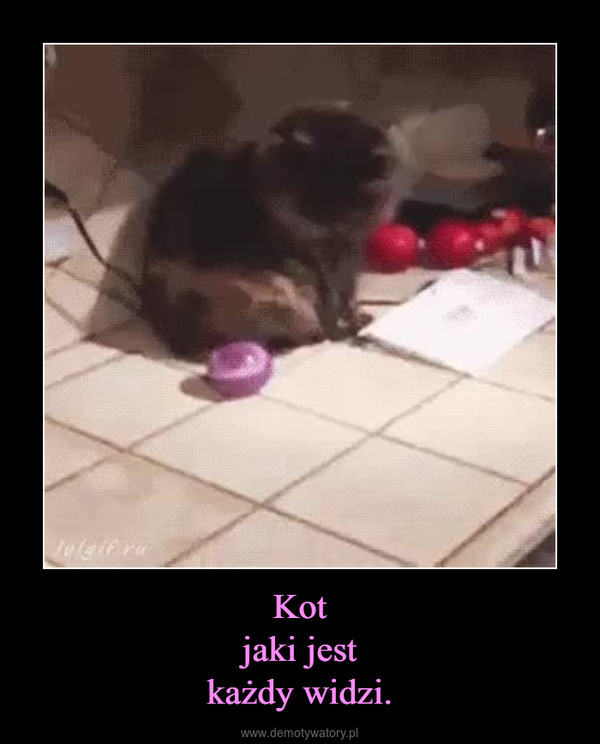 Kotjaki jestkażdy widzi. –