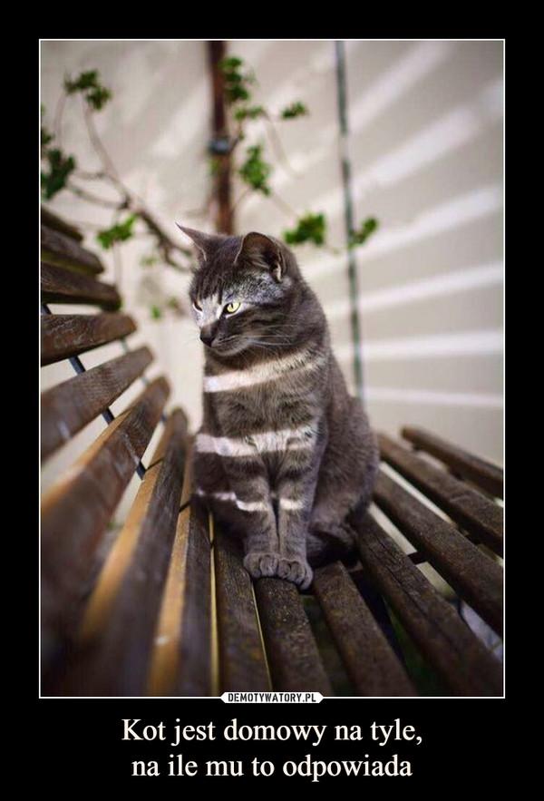 Kot jest domowy na tyle,na ile mu to odpowiada –