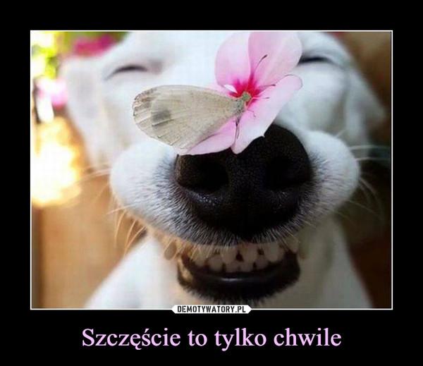 Szczęście to tylko chwile –