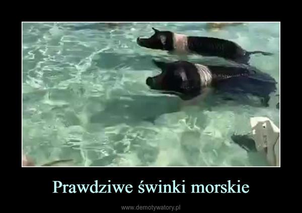 Prawdziwe świnki morskie –