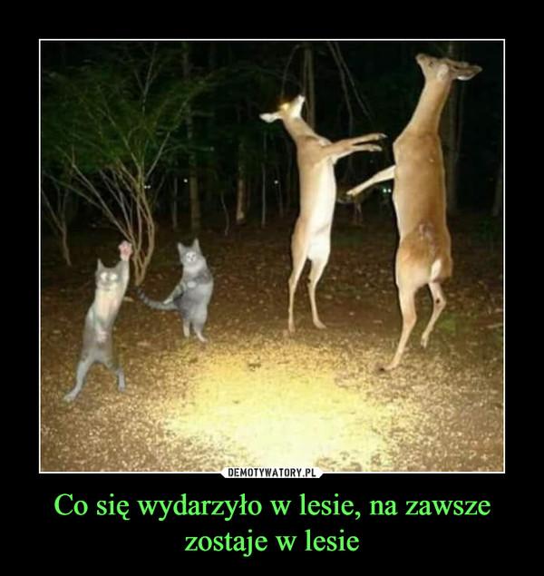 Co się wydarzyło w lesie, na zawsze zostaje w lesie –