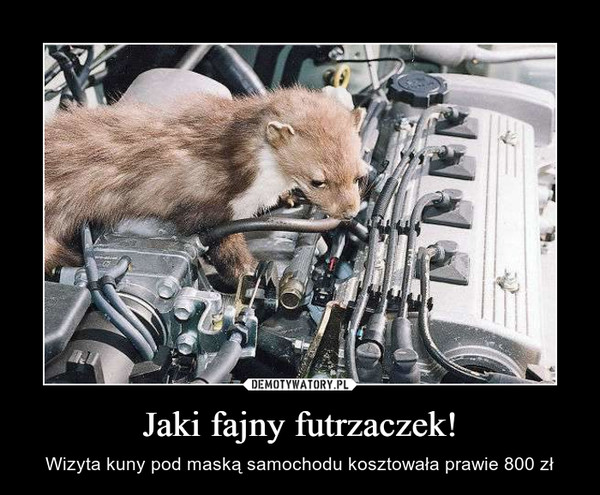 Jaki fajny futrzaczek! – Wizyta kuny pod maską samochodu kosztowała prawie 800 zł