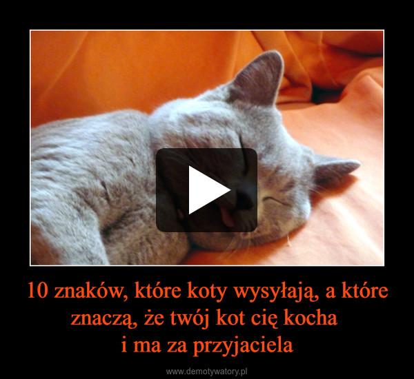 10 znaków, które koty wysyłają, a które znaczą, że twój kot cię kocha i ma za przyjaciela –