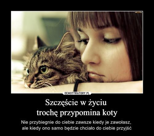 Szczęście w życiu  trochę przypomina koty