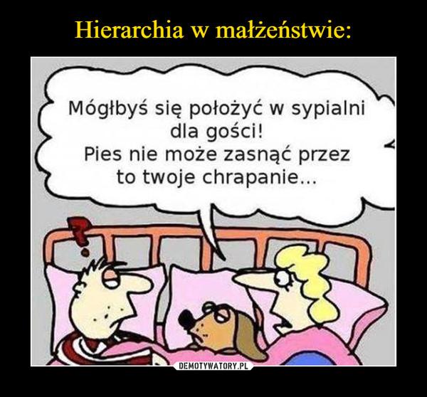 –  Mógłbyś się położyć w sypialni dla gości! Pies nie może zasnąć przez to twoje chrapanie