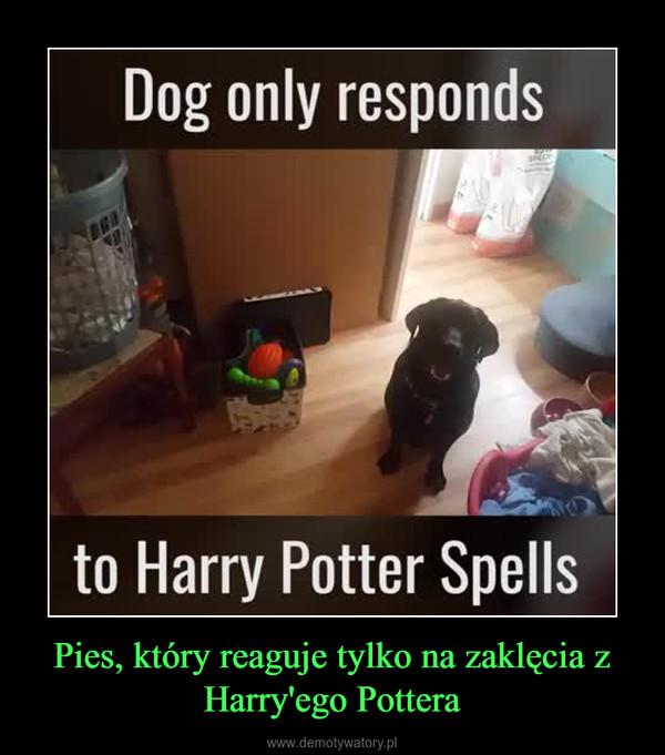 Pies, który reaguje tylko na zaklęcia z Harry'ego Pottera –