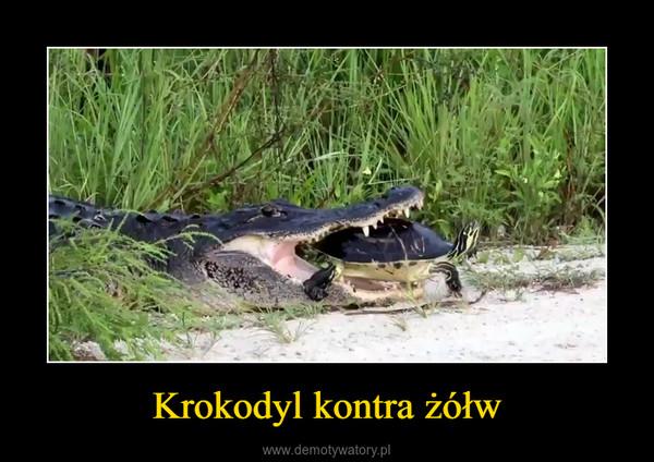 Krokodyl kontra żółw –