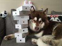 Syn najbogatszego człowieka w Chinach kupił swojemu psu osiem iPhonów 7 – To uczucie, kiedy pies ma lepsze życie niż ty