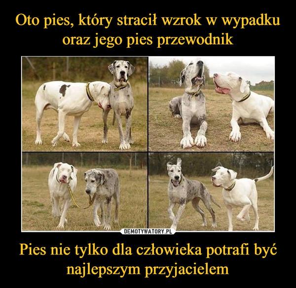 Pies nie tylko dla człowieka potrafi być najlepszym przyjacielem –