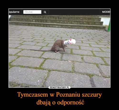 Tymczasem w Poznaniu szczury  dbają o odporność