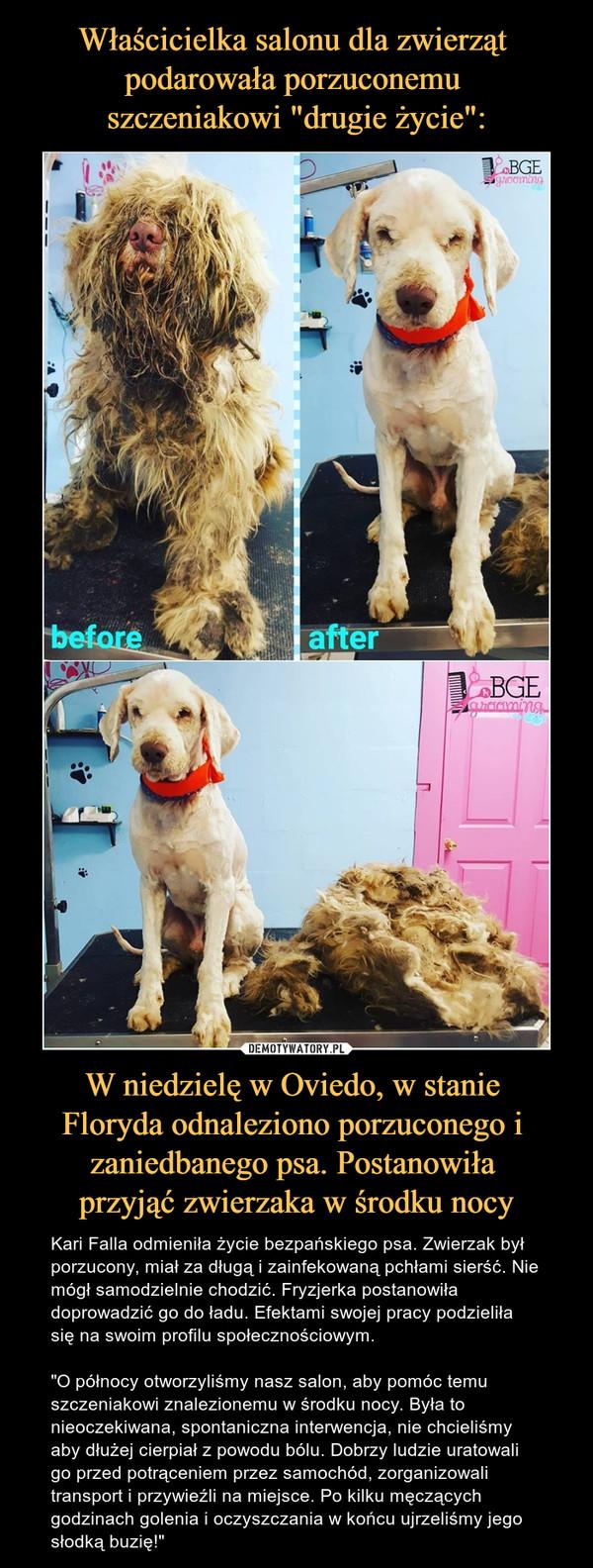"""W niedzielę w Oviedo, w stanie Floryda odnaleziono porzuconego i zaniedbanego psa. Postanowiła przyjąć zwierzaka w środku nocy – Kari Falla odmieniła życie bezpańskiego psa. Zwierzak był porzucony, miał za długą i zainfekowaną pchłami sierść. Nie mógł samodzielnie chodzić. Fryzjerka postanowiła doprowadzić go do ładu. Efektami swojej pracy podzieliła się na swoim profilu społecznościowym.""""O północy otworzyliśmy nasz salon, aby pomóc temu szczeniakowi znalezionemu w środku nocy. Była to nieoczekiwana, spontaniczna interwencja, nie chcieliśmy aby dłużej cierpiał z powodu bólu. Dobrzy ludzie uratowali go przed potrąceniem przez samochód, zorganizowali transport i przywieźli na miejsce. Po kilku męczących godzinach golenia i oczyszczania w końcu ujrzeliśmy jego słodką buzię!"""" before after"""