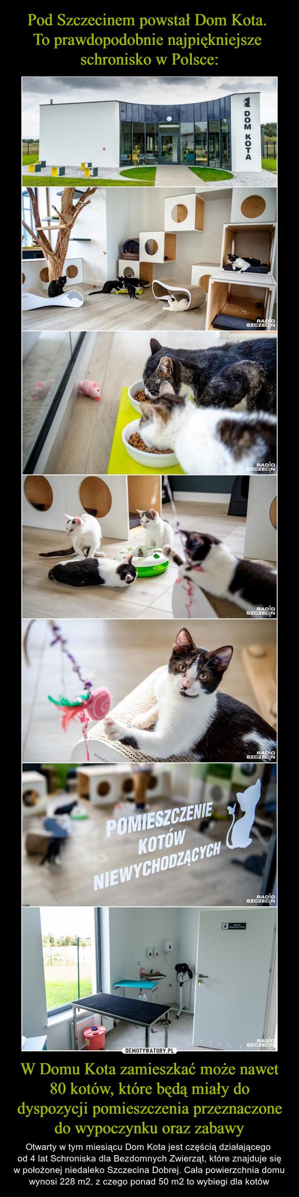 W Domu Kota zamieszkać może nawet 80 kotów, które będą miały do dyspozycji pomieszczenia przeznaczone do wypoczynku oraz zabawy – Otwarty w tym miesiącu Dom Kota jest częścią działającego od 4 lat Schroniska dla Bezdomnych Zwierząt, które znajduje się w położonej niedaleko Szczecina Dobrej. Cała powierzchnia domu wynosi 228 m2, z czego ponad 50 m2 to wybiegi dla kotów
