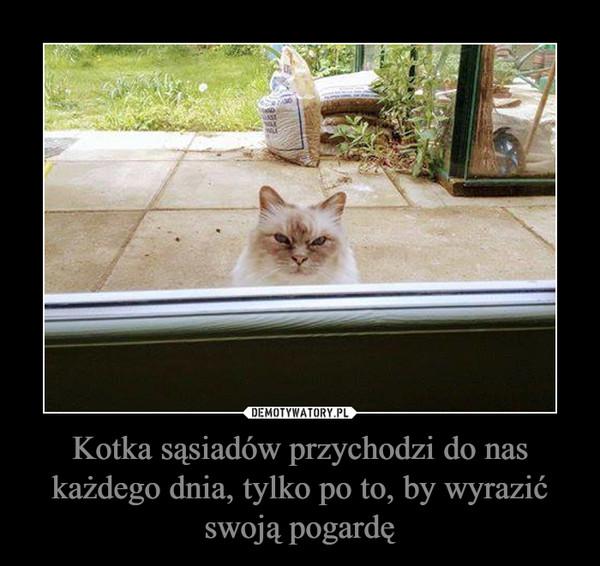 Kotka sąsiadów przychodzi do nas każdego dnia, tylko po to, by wyrazić swoją pogardę –