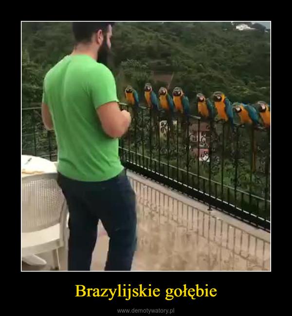 Brazylijskie gołębie –